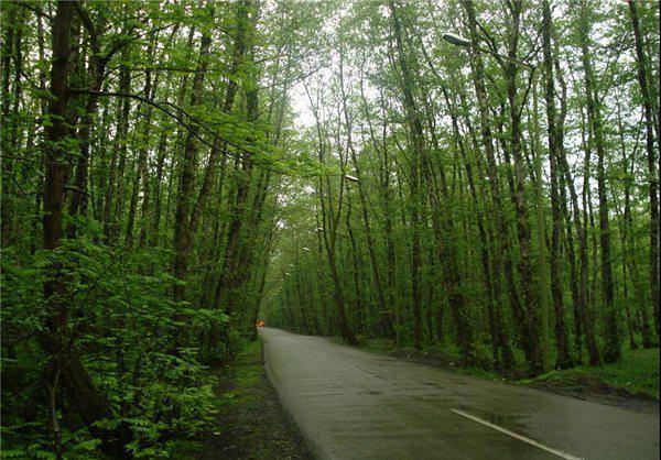 جنگل-گیسوم-گیلان